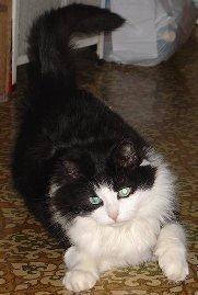 Забава Путятишна -красавица- кошка после расставания с мужчиной своей мечты ищет новый дом.