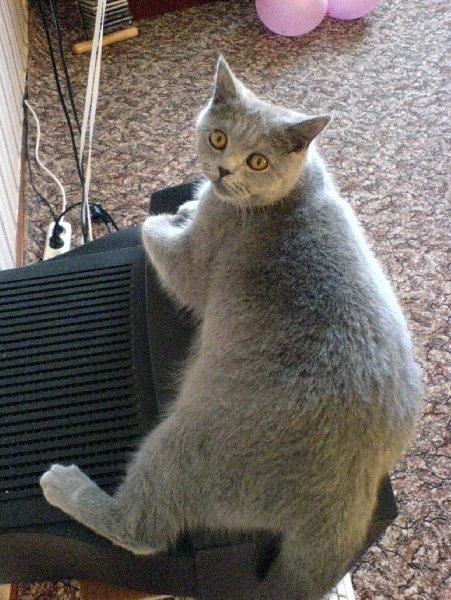 Телевидение-окно в Кошачий мир!