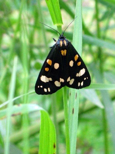 Макро-бабочка
