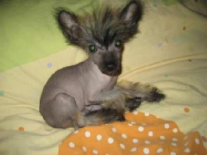 А Это Нафаня! Вот такой чудной пёс =))))