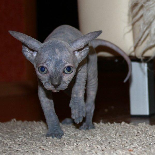 """Котенок познает мир, первый выход в \\\""""свет\\\"""", все интересно и страшно..."""