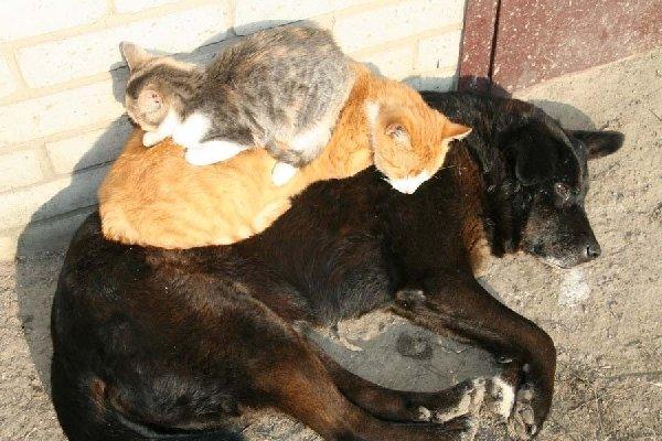 Вместе не только веселее, но и теплее.