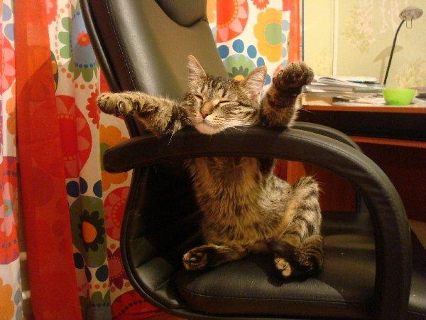 сон в кресле