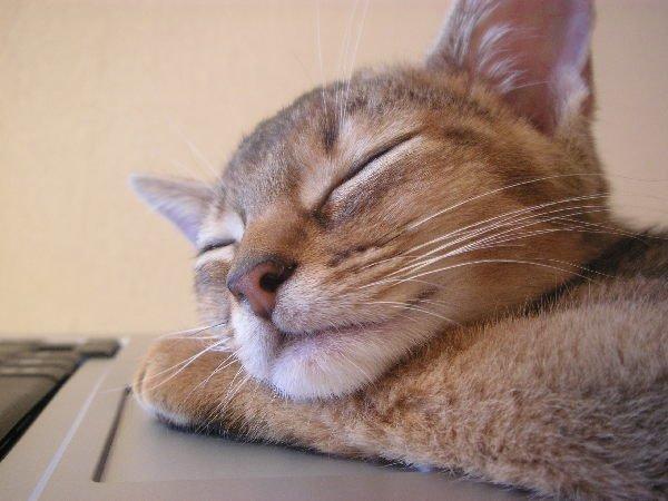 Рыська..    очень любимая кошка и как кошка сисадмина обожает компы :) дада котенка со знанием windows, linux, mac os :))))