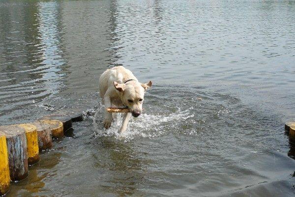 любитель бегать по воде