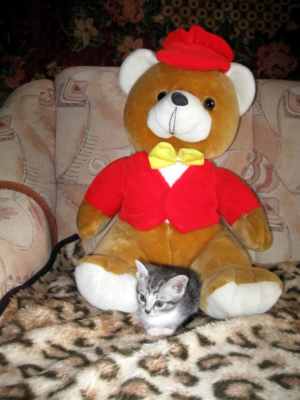 Соня и медведь