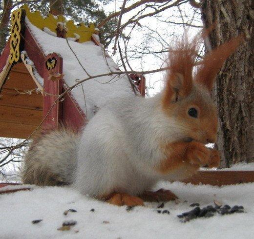 В Сибирской местности