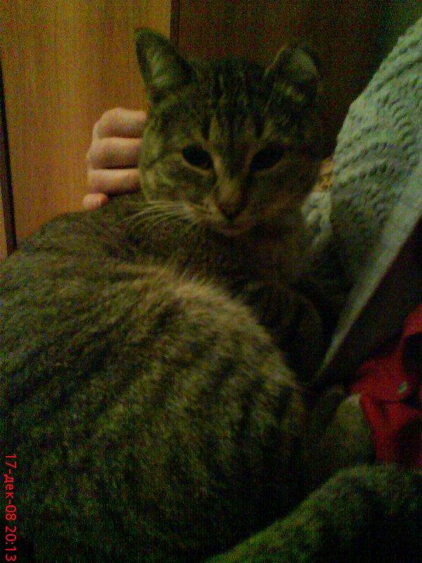 Афоня мой котяра