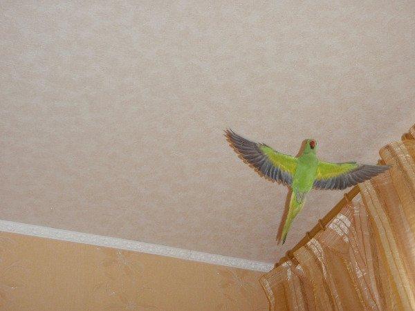 а мне летать охота...