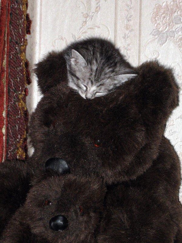 Я тоже медведь!