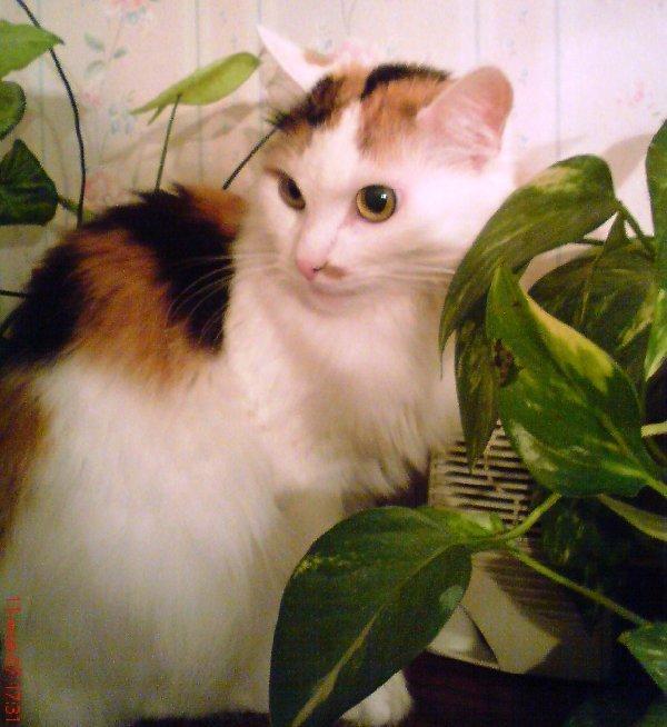 Кошка Софьюшка