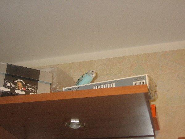 обследуем шкаф