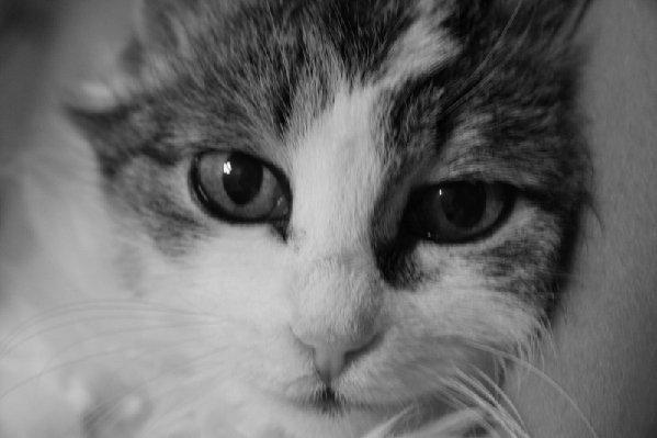 Кошка Пуфик
