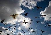 Птичий грипп.Новости планеты.
