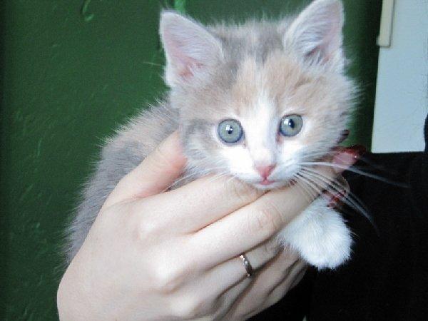 "мой любимый котеночек \\\"" Царапучка\\\""."