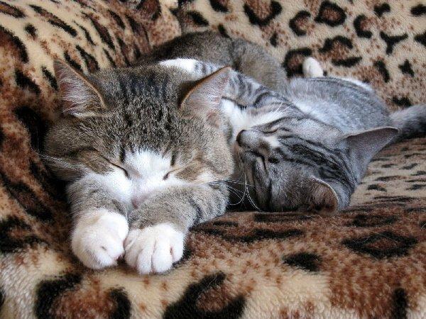 Сладкий сон Кузи и Сони