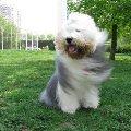 Унесенный ветром (любимый мальчик)