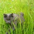 Гуляем на даче (первый раз в жизни кота)