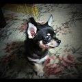 Это наш любимец-Мики. Ему всего 2 месяца