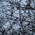 О чем поют воробушки в последний день зимы?