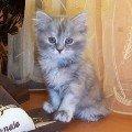 Наша кошечка Алиса