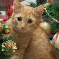 Это Кекс,   наш найденыш.Его первый Новый год с нами.