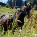 На пастбище в Альпах