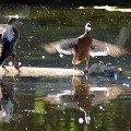 Танцы на воде.