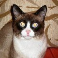 Любимый кот - B@k$)