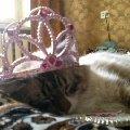 король решил отдохнуть