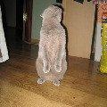 Бася любит постоять столбиком