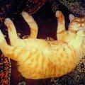 наш кот Левуша