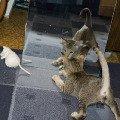 Охота на крысу. В паре не страшно!