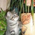 Вискас и цветочек