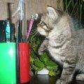 Я умняшка кот