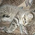 Котёнок мой