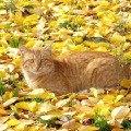 Осенний Рыжик