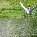 """Чайка-\""""тяжелоатлет\"""",   или А мне летать охота!"""
