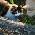 "Игра в \""кошки-мышки\"""