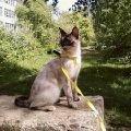 Моя кошка Эльза