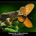 На зеленой солнечной опушке<br /> Прыгают зеленые лягушки<br /> И танцуют бабочки-подружки,  <br /> Расцветает все кругом...