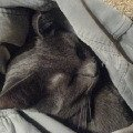 ОООчень любимое животное!  <br /> спит как младенец...