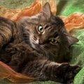 В дар роскошная,   крупная кошка с золотым характером.Очень ласковая<br /> <br /> Пол-кошка <br /> кличка-Ласточка <br /> порода-метис сибирской <br /> возраст-4-5 лет <br /> здоровье-стерилизована,   привита <br /> мини-описание:Очень ласковая,   очень крупная (не меньше 5 кг) красивая кошечка с крупным ярко очерченным носиком. Не привередлива в еде,   лоток знает. Очень хочет быть единственной любимицей в семье. С другими животными держит нейтралитет.<br /> <br /> <br /> Лена<br /> г. Москва<br /> Москва<br /> тел.: 8-926-503-69-54<br /> e-mail: elena0777@rambler.ru <br /> <br /> фоторабота Филантроп