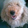 Его зовут Shandy!  :) и он дарит теплоту и доброту каждому кто обратит на него внимание!  :)