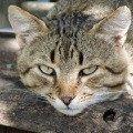 Мурчик. Обычный,   но симпатичный кот,   живущий в сельском доме и появляющийся в нём только когда соскучится или проголоается