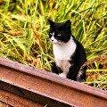 Шатурский кот на перепутье