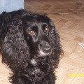 Моя любимая собачка ДЖЕССИ,   ей уже 10 лет)