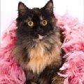 в дар<br /> пол -кошка Кличка - Мотя <br /> порода- метис персидской <br /> Возраст - 10 месяцев <br /> здоровье- здорова,   стерилизована,   привита <br /> мини-описание: Исключительно ласковая и контактная пушистая молоденькая кошечка потрясающей красоты,   яркого черепахового окраса. Очень ценит оказанное внимание,   тянется к людям,   благодарная и отзывчивая умница и чистюля. <br /> Москва 8-903-792-00-28 8-926-503-69-54 Лена elena0777@rambler.ru <br /> http://i055.radikal.ru/0909/cc/8bfb91e83191.jpg<br /> http://s45.radikal.ru/i107/0909/c9/64ff8f56bf2d.jpg<br /> http://i038.radikal.ru/0909/f4/aac8049dca0f.jpg<br /> фоторабота Филантроп