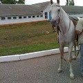Арабы на Терском конном заводе