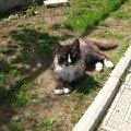 наш деревенский красавчик - кот Васька